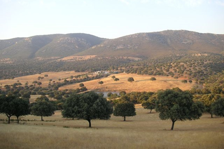 Big game hunting estate. Pastures