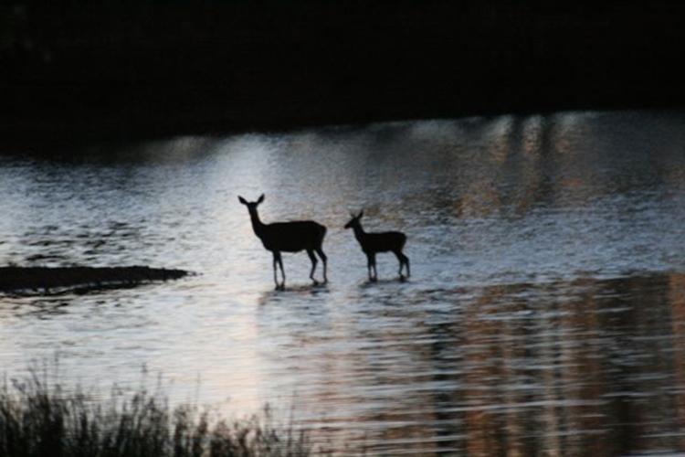 Big game hunting estate. Ponds