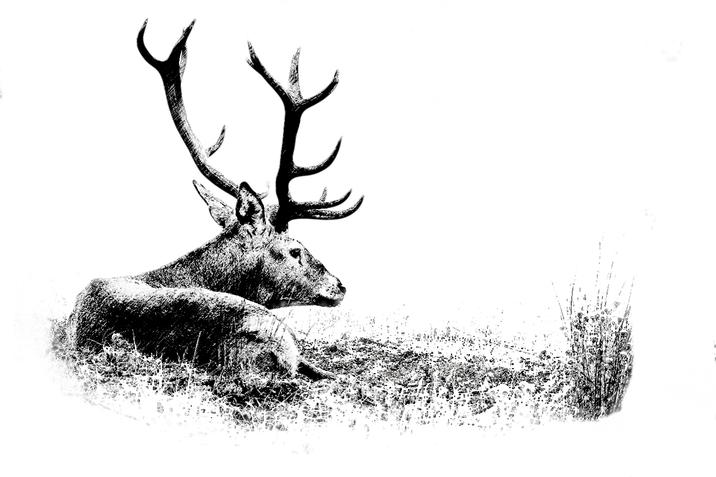 Big game hunting estate. Spain. Iberian red deer. Drawing