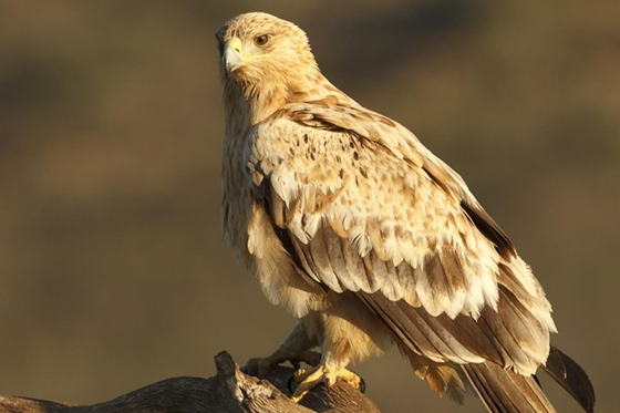 Observation of nature. Eagles